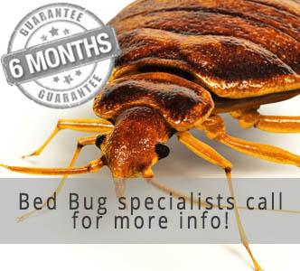 Pest Control Reading