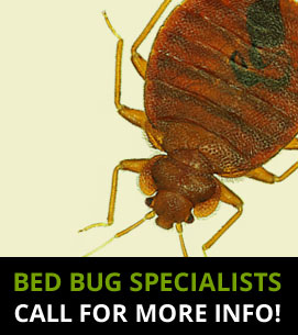 Bed Bug Specialists